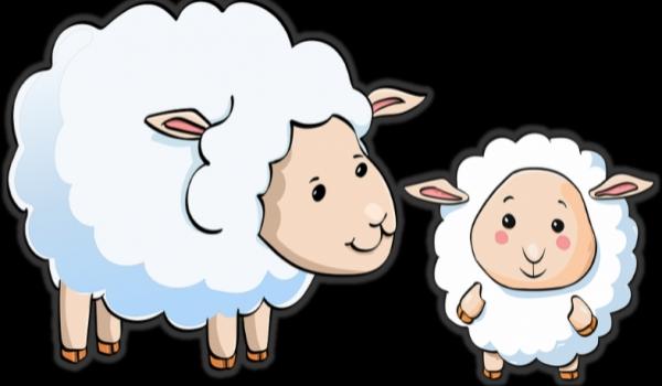 Infosessie 'ik heb de schaapjes geteld en ben nog steeds wakker'